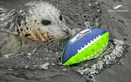 barney football